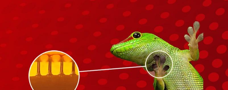 nanoGriptech-gecko-blog1